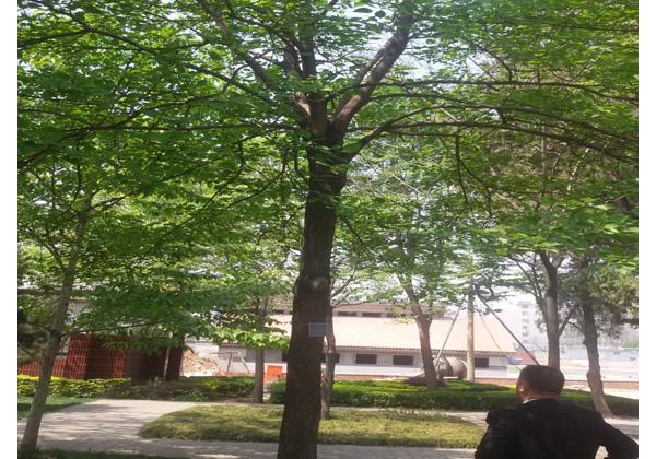 园林绿化1