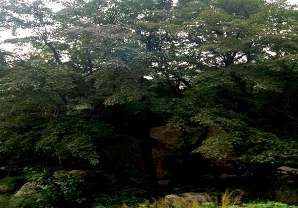 荒山造林1